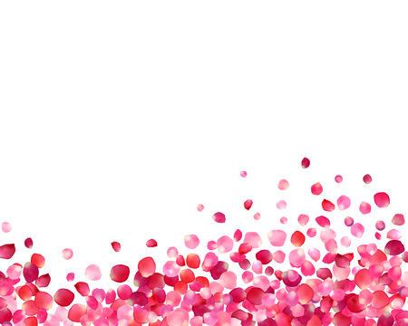 White background with vector pink rose petals Ilustracja