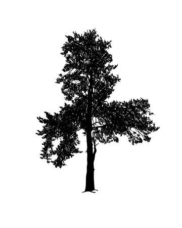 Pine tree vector silhouette black on white Vetores