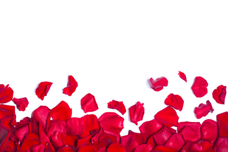 Romantic background with red rose petals on white