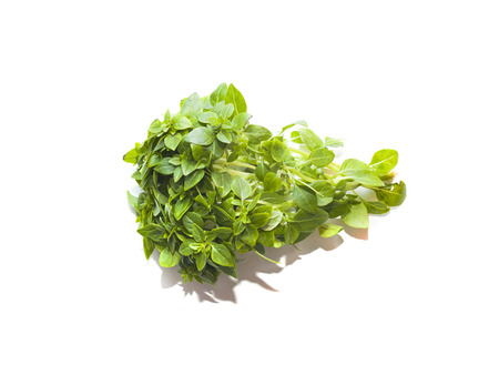 Bunch of green basil isolated on white background