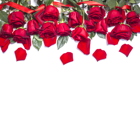 Red fresh rose flowers on white background