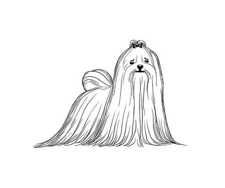 Maltese dog vector illustration. Black and white Illustration