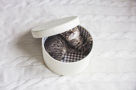 Cute kitten in cozy white round box