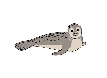 Cute seal on white background. Vector illustration