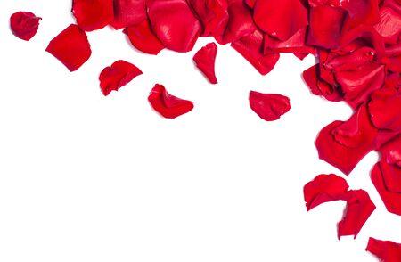 Fond romantique avec des pétales de rose rouges sur blanc