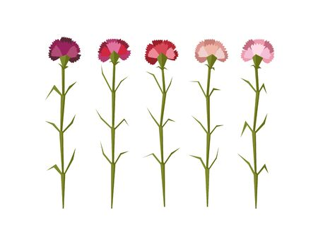 Set of five vector flat carnation flowers isolated on white background Ilustrace