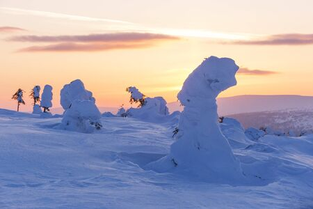 Snow covered trees. Frosty dawn on the Northern Ural mountains, Komi Republic, Russia