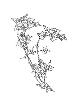 Vector linear ivy leaves on white background Ilustracje wektorowe