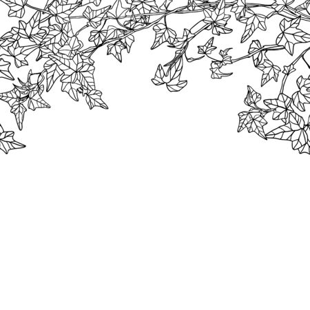 White background with vector linear ivy leaves Vetores
