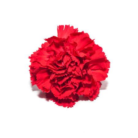Red carnation flower isolated on white background Zdjęcie Seryjne
