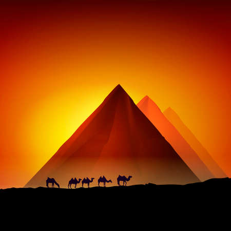 Camels near the Egyptian pyramids. Vector illustration 일러스트