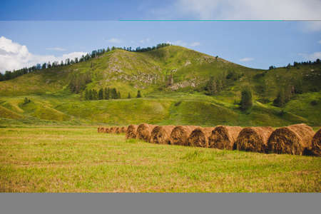 Straw rolls on field. Altai mountain landscape 版權商用圖片