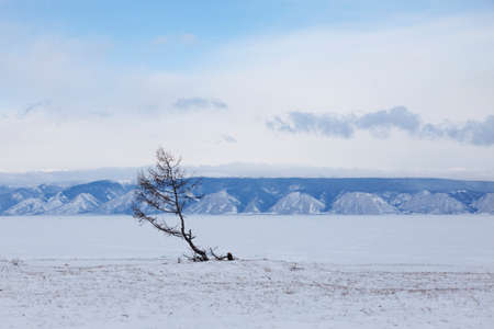 Lonely tree on the shore of Lake Baikal. Olkhon island winter landscape