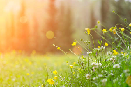 Spring background. Sunny meadow blurred background with wildflowers, grasses and green fresh grass. Spring, nature, summer and sun concept Stockfoto