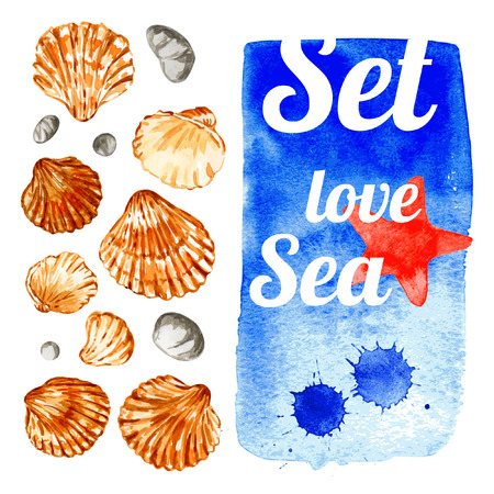 Set of seashells. Isolated on white. Vector illustration. Watercolor.