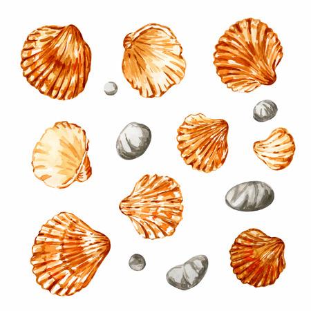 seashell: Set of seashells. Isolated on white. Vector illustration. Watercolor.