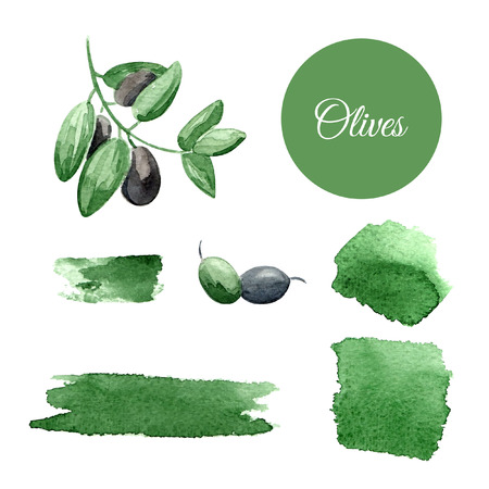 Watercolor vector background with olives. Can be used for wallpaper, background, banners, invitation, pack, web page. Illustration