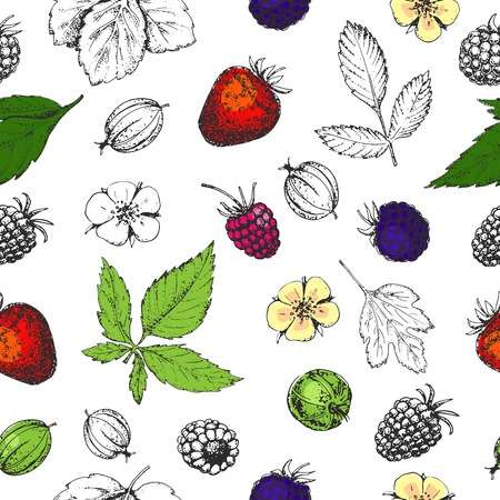 Seamless vector hand drawn pattern with berries. Vitamins. Vintage illustration in style of engraving. Healthy food. Strawberry, flower, raspberry, blackberry, gooseberry. Sketch.