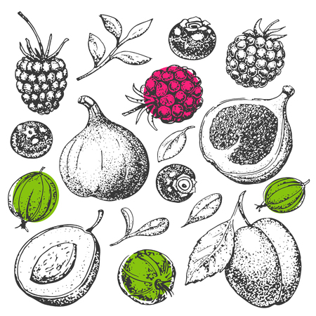 Vector hand drawn food. Fruit and berries. Vitamins. Vintage illustration in style of engraving. Healthy food. Strawberry, raspberry, blackberry, gooseberry, figs, plum, apricot. Sketch. Organic food.