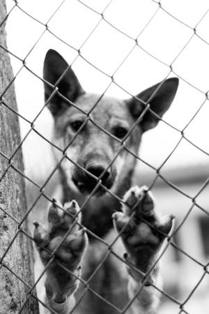 perro triste: Perro del refugio
