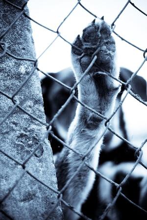 Dog shelter Stock Photo - 11893780