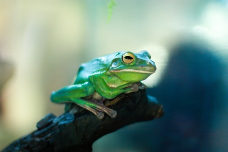 exotic frog: Exotic frog