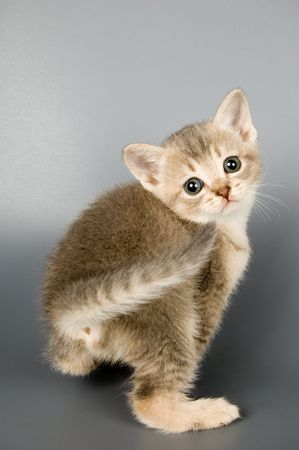 Kitten whom the first time poses in studio