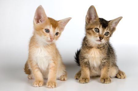 Kittens in studio