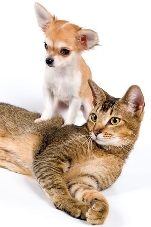 The puppy with a cat Banque d'images