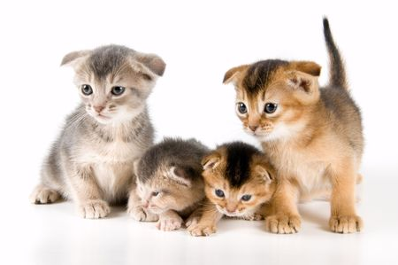 Kittens in studio  on a neutral background