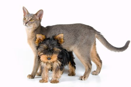The puppy and kitten in studio on a neutral background