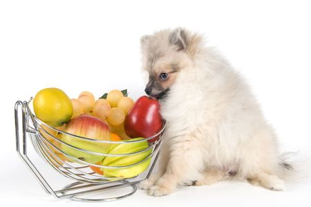 The puppy of the spitz-dog and fruit