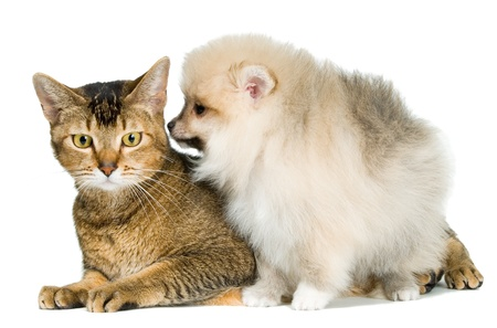 Cat and puppy Banque d'images