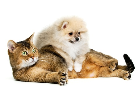 Cat and puppy  in studio Banque d'images