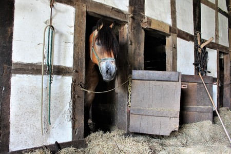 An image of a sleeping horse in a vintage stable Stock Photo