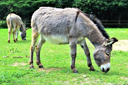 An image of a donkey - animal
