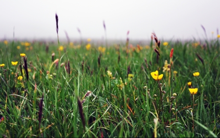 enveloped: Thick fog enveloped the field  that photography has become an interesting