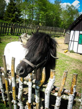 Pony stands in surrounded by a wooden fence territory