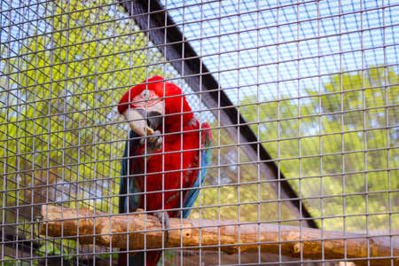 Parrot Macaw (Also Known As Ara) In A Spacious Cage At The Zoo. Photo In Selective Focus.