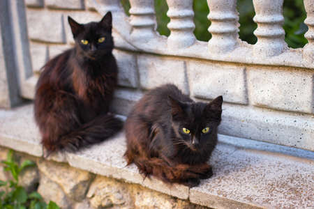 Two black cats sitting on a stone fence Stock fotó