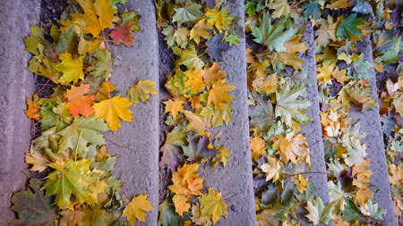 Fallen yellow red green leaves lie on an old stone staircase