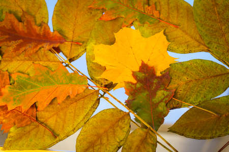 Fall background from yellowed leaves Stock fotó