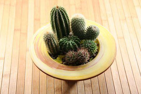 florets: cactus
