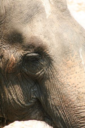 forgetfulness: elephant