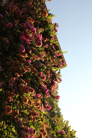 house of flowers photo
