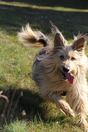 dog in grass photo