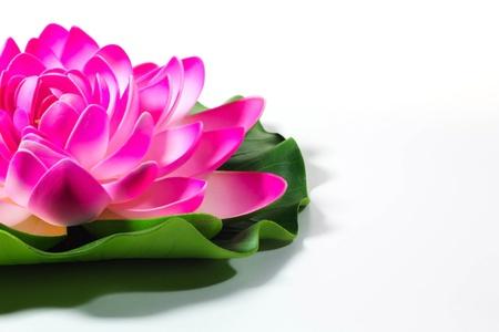 pink lotus flower Stock Photo - 15755861