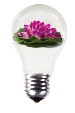 light bulb with flower Stock Photo - 15815575