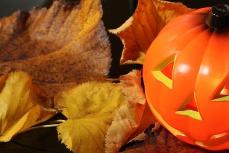halloween Stock Photo - 15815577
