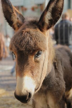 little donkey Stock Photo - 15914611
